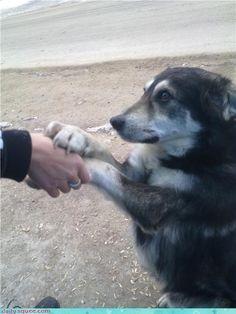 """Dog love <3 """"Don't go?"""""""