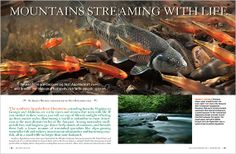 Appalachian Rivers: Streaming with Life