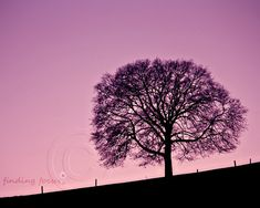 Tree Photo Violet Purple Twilight Evening Sky by findingfocus