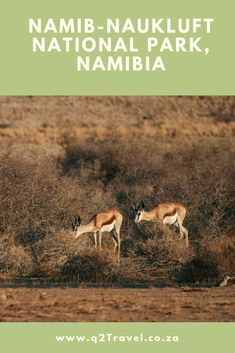 Find information about Namib-Naukluft National Park - the largest game park in Africa. Tourists visit the Namib-Naukluft National Park for many reasons, including desert walks, photographic safaris and birdwatching. Bird Watching, Safari, National Parks, Africa, Game, Blog, Travel, Viajes, Gaming
