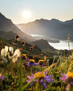 One month left and there will be seas of mountain flowers in the engadine valley #engadine #bregaglia #mountainlife #alps #sils #watchthisinstagood #switzerland #graubünden #solitude #timeoutsociety
