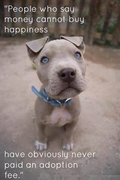 Bring sunshine, love and kisses into your home and save a dog's life all for the price of an adoption fee. Seems like a pretty good deal!