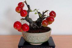 ♥ᴥA little #bonsai inspiration for today!♦♦       #BonsaiInspiration