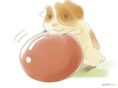 Fun activities for you and your guinea pig