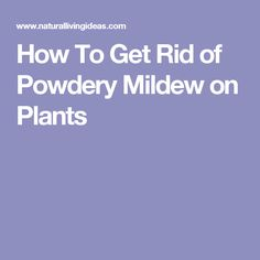 How To Get Rid of Powdery Mildew on Plants