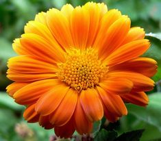 A lovely yellow marigold A good post on English and Spanish words.