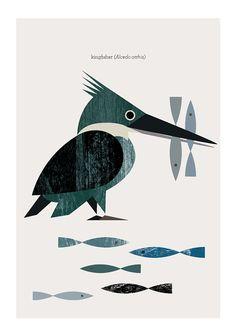 Kingfisher  Martín Pescador  wood texture by MandarinaPrint, $5.00