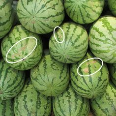5 Key Tips To Pick The Perfect Watermelon Watermelon Hacks, Sweet Watermelon, Watermelon Ripeness, Fruit And Veg, Fruits And Vegetables, Fresh Fruit, Fruit Picking, Picking Watermelon, Storing Fruit
