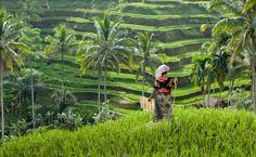 Bali - The rice terraces near Ubud, Bali are something that needs to be seen.