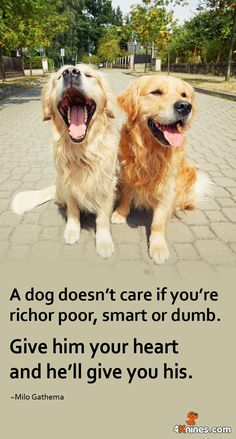 A dog doesn't care if you're rich or poor, smart or dumb. Give him your heart and he'll give you his. #inspiration