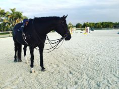 """melissamatoss: """" Afternoon hack with my numero uno  """""""