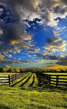 The color is the photo is fantastic. The line in this photo creates depth and draws the viewer into the image. The value is created by the fence and the sun. I love how all of the components of the image come together.