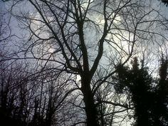 One of my tree pictures.  I love taking photos of trees.