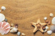 Fondo de Pantalla de Arena, Conchas, Estrella, Mar, Playa