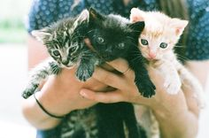 baby cats!