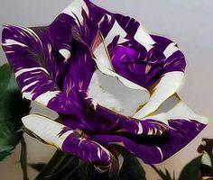 Una recopilación muy personal de las flores más bellas y raras                                                                                                                                                     Más