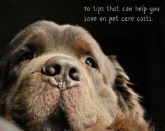 10 Tips That Can Help You Save On Pet Care Costs