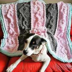 Jacob Earl (@aclearjob) • Instagram photos and videos Boston Terrier, Blanket, Photo And Video, Knitting, Videos, Dogs, Photos, Animals, Instagram