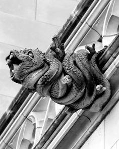 Gargoyle Grotesque, Washington National Cathedral