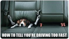 How to tell when you're driving too fast funny dog meme