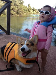 #corgi via facebook: https://www.facebook.com/photo.php?fbid=635912353089680=o.104617983090=1