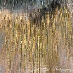 Reflected Grasses with frost in March A set of four photos. Tall winter grasses, tipped by frost, reflected on a pond. High quality prints available in a variety of sizes. Create unique wall art for your home or office. Unique Wall Art, Grasses, Abstract Photography, Pond, Frost, Reflection, March, Create, Natural
