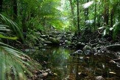 Cape York Peninsula Rain Forest