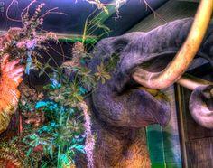 48 Best Lakeland Florida Images Lakeland Florida