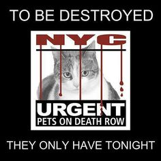 URGENT DEATH ROW CATS - TO BE DESTROYED MONDAY 3/31/14  https://www.facebook.com/media/set/?set=a.576546742357162.1073741827.155925874419253&type=1… pic.twitter.com/xe6lYFrzOf