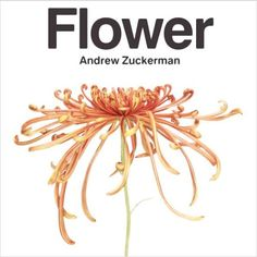 Andrew Zuckerman's New Photography Book Captures Natural Beauty of Flowers : Architectural Digest