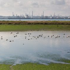 Fawley Oil Refinery Hampshire. #ukcoastwalkPhoto: Quintin Lake www.theperimeter.uk