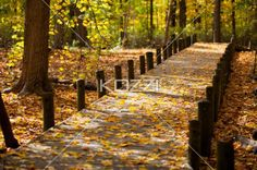walkway and maple leaves. - Image of walkway and maple leaves.