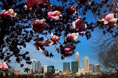 Charlotte Nc in the spring