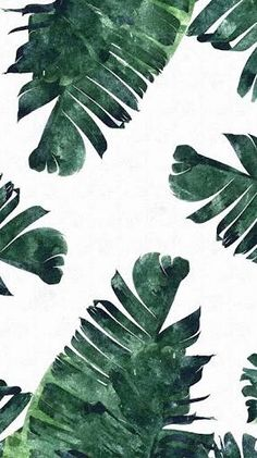 Tropical leaves iPhone wallpaper More Tropical Summer Desktop wallpaper – Summer computer…Tropical flowers and leaves vintage by mystel on…tropical Split Leaves plant botany watercolour… Iphone Wallpaper Tropical, Leaves Wallpaper Iphone, Wallpaper Free, Plant Wallpaper, Tumblr Wallpaper, Aesthetic Iphone Wallpaper, Screen Wallpaper, Aesthetic Wallpapers, Watercolor Wallpaper Iphone