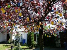 Here is an article all about the origins of the Easter Egg Tree. One man in Germany has a tree with over handmade eggs on it! He started his project in Holiday Tree, Christmas Tree, Holiday Decor, Holiday Ideas, Easter Tree, Easter Eggs, Grand Parc, Egg Tree, Evergreen Trees