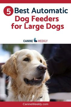 5 Best Large Automatic Dog Feeders in 2018 b67bd7470