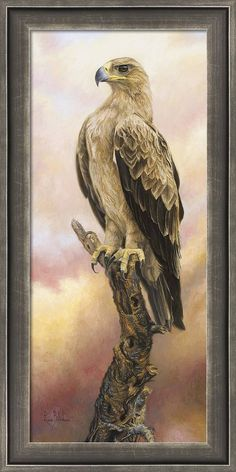 Wildlife Paintings, Wildlife Art, Animal Paintings, Bird Paintings, Eagle Pictures, Bird Pictures, Eagle Images, Drawing Pictures, Bird Drawings