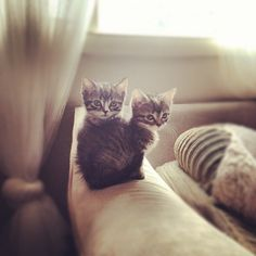 des ti chats, des ti chats, des ti chats chats chats... :)