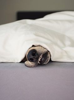 dog tired, Harles Lynn