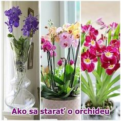 Ako sa starať o orchideu, ako pestovať orchideu Orchid Care, Gerbera, Indoor Plants, House Plants, Glass Vase, Home And Garden, Holiday, Diy, Beautiful