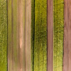 Crop Rows - Marmont Hill