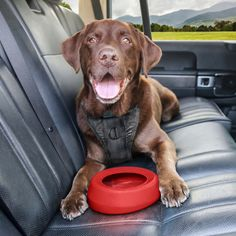 This pet travel bowl's ingenius design makes it spill and splash proof. Use as a dog water bowl for the car so your dog can get a drink anytime. Dog Water Bowls, Dog Bowls, Funny Dogs, Cute Dogs, Biking With Dog, Frozen Dog, Splash Free, Cute Dog Photos, Dog Safety
