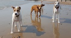 Hastings Dog Walking - Doggy Day Care 3