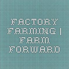 Factory Farming   Farm Forward