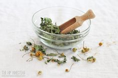 Herbal Gardening Chill Out Herbal Tea Dry Lemon Balm The Hip Homestead - Fast and Easy Chill Out Herbal Tea Recipe From The Hip Homestead Diy Herb Garden, Herb Gardening, Indoor Gardening, Organic Gardening, Garden Ideas, Calming Tea, Dried Lemon, Types Of Herbs, Organic Living