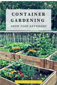 Container gardening offers so much flexibility to a gardener. You can grow food just about anywhere with the use of containers!