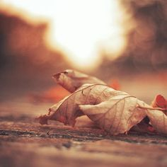 This HD wallpaper is about dry leaf, brown leaf in selective focus photography, nature, flowers, Original wallpaper dimensions is file size is Tree Wallpaper, Original Wallpaper, Leaves Wallpaper, Close Up Photography, Nature Photography, Orange Leaf, Flower Landscape, Parts Of A Plant, Latest Hd Wallpapers