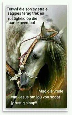 Afrikaans, Good Night, Trek, Horses, Animals, Have A Good Night, Animaux, Animales, Horse