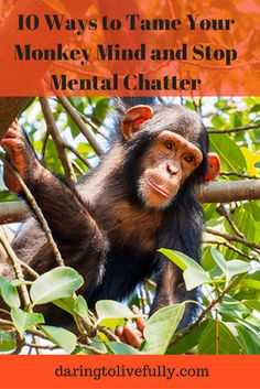 The constant chatter of the mind is often referred to as monkey mind. In this post you'll discover 10 ways to tame your monkey mind. Healthy Meals For One, Easy Healthy Dinners, Monkey Mind, Buddhist Quotes, Negative Thinking, Body Hacks, Mindfulness Quotes, Health Articles, Yoga Meditation
