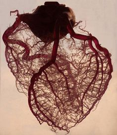 This is the blood vessels of an actual heart (This is a Pig heart, close to human heart). The blood is replaced by a plastic resin which fills all of the veins, capillaries, etc, then the heart is put into a solution that dissolves all the tissue, leaving this incredible detail of a heart. / by Glockoma on Flickr